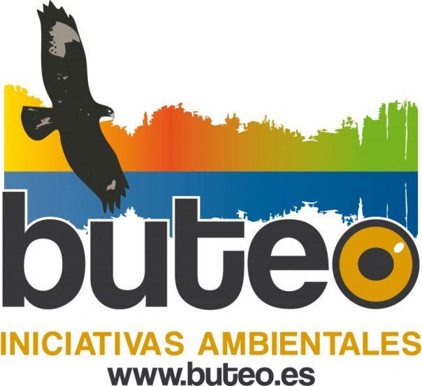 buteo
